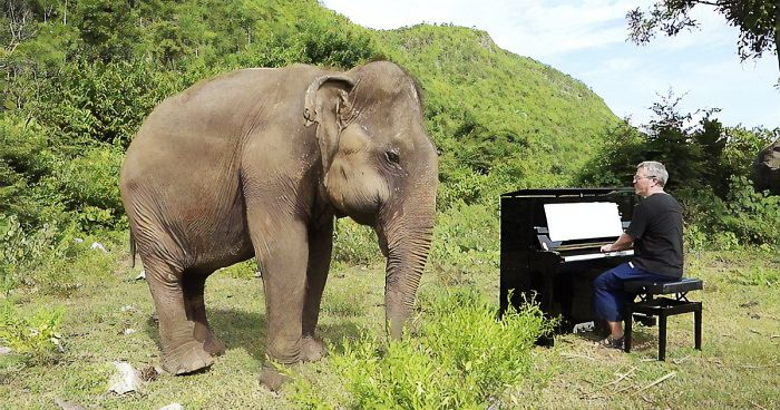 Blind Elephant Starts To Dance Once She Hears The Pianist Playing To Comfort Her | Bored Panda