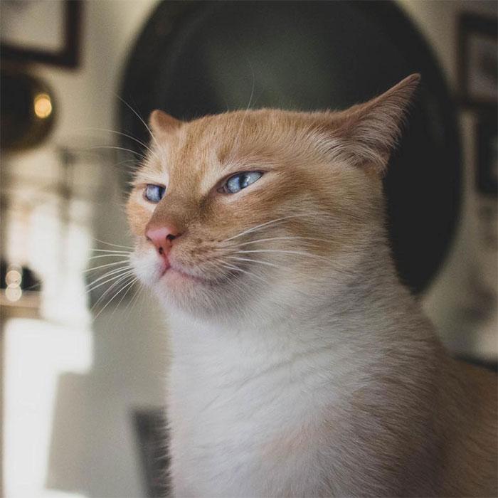 Seolah 'Terobsesi' Pisang, Potret Kucing Ini Sukses Bikin Netizen Gemas