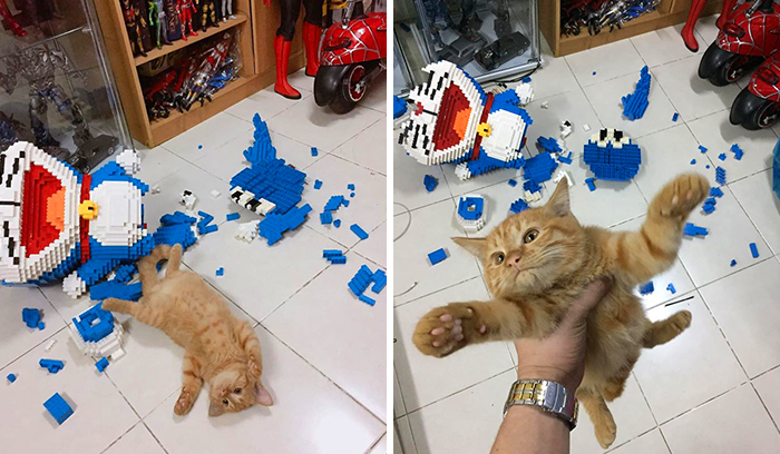 Cat Destroys A 2,432-Piece Doraemon Figure That Took Its Owner 7 Days To Make, Doesn't Seem To Regret It