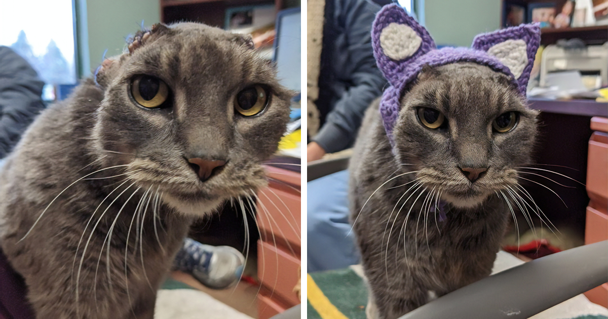 Stray Cat With Crocheted Ears Finally Finds A Forever Home