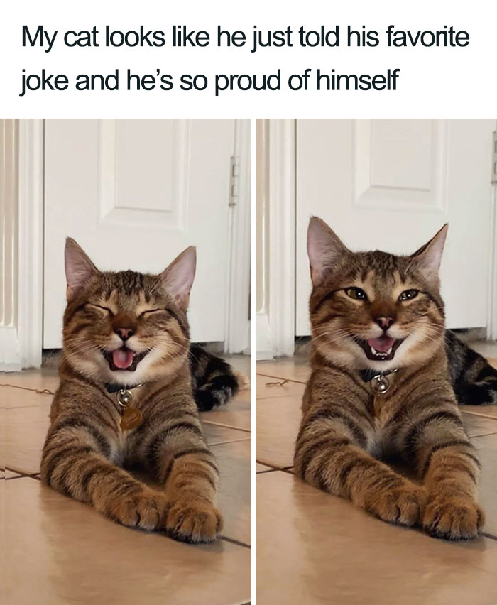 Owner Uploads Photos Of Their Laughing Cat And It Becomes The New