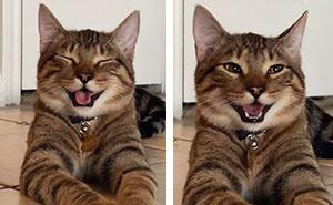 """Esta mujer subió fotos de su gato riendo, y se ha convertido en el nuevo meme de las """"bromas de padre"""" (10 imágenes)"""