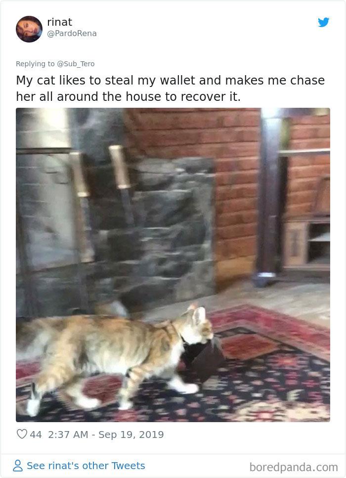 Cats-Do-Weird-Things