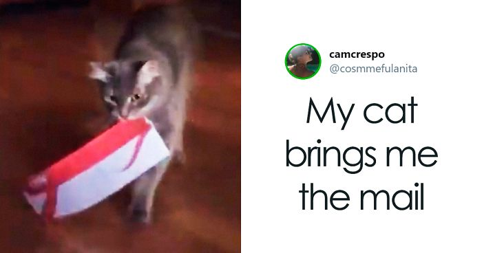 People On Twitter Are Posting Pictures Of Their Cats' Weirdest Habits (30 Tweets)