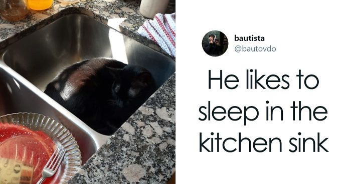 30 Weirdo Cats Get Exposed By Their Owners In A Funny Thread