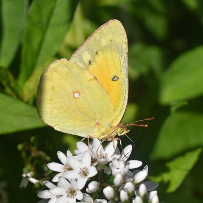I Photograph Butterflies
