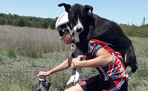 Cyclist Stops Mid-Practice To Help A Dehydrated Dog, Ends Up Carrying It On His Back