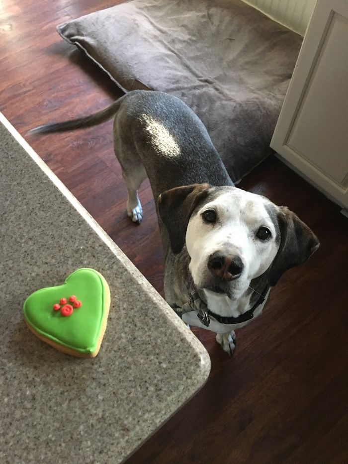 Dogs Can And Will Use Deception To Get A Tasty Treat