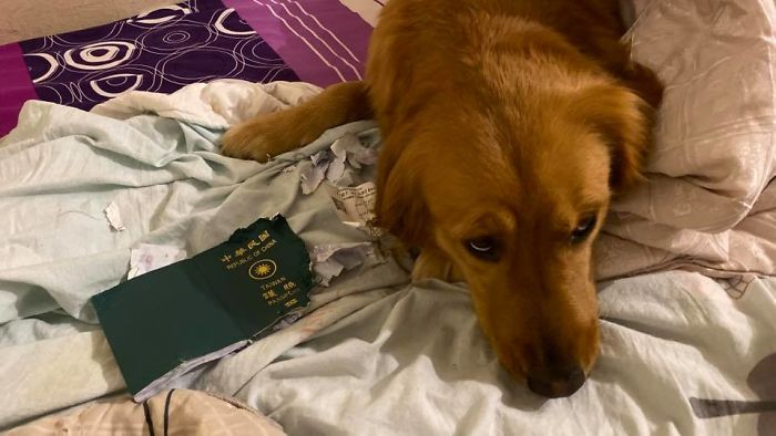 Dog Stops Owner From Going To Wuhan By Destroying Her Passport, Potentially Saves Her