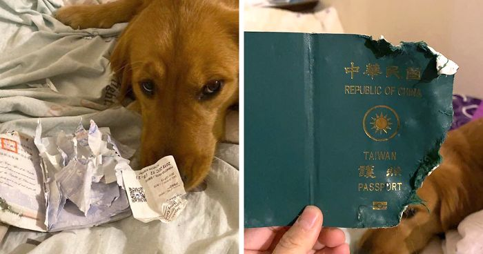 Dog Prevents Woman From Traveling To Coronavirus-Infected Wuhan By Destroying Her Passport