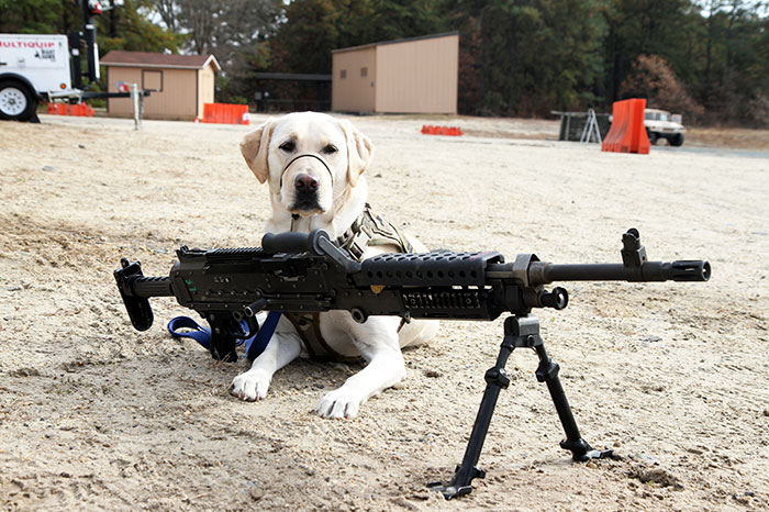 There Have Been Numerous Cases Of Dogs Shooting Their Owners In America