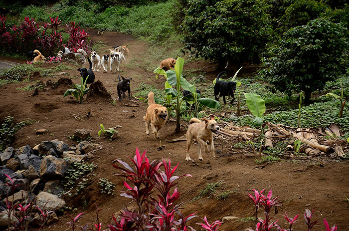There Is A Terrioty In Costa Rica Called Territorio De Zaguates That Is A Huge No-Kill Dog Shelter