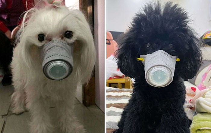 Scared Of Coronavirus, Chinese People Have Started Putting Masks On Their Pets