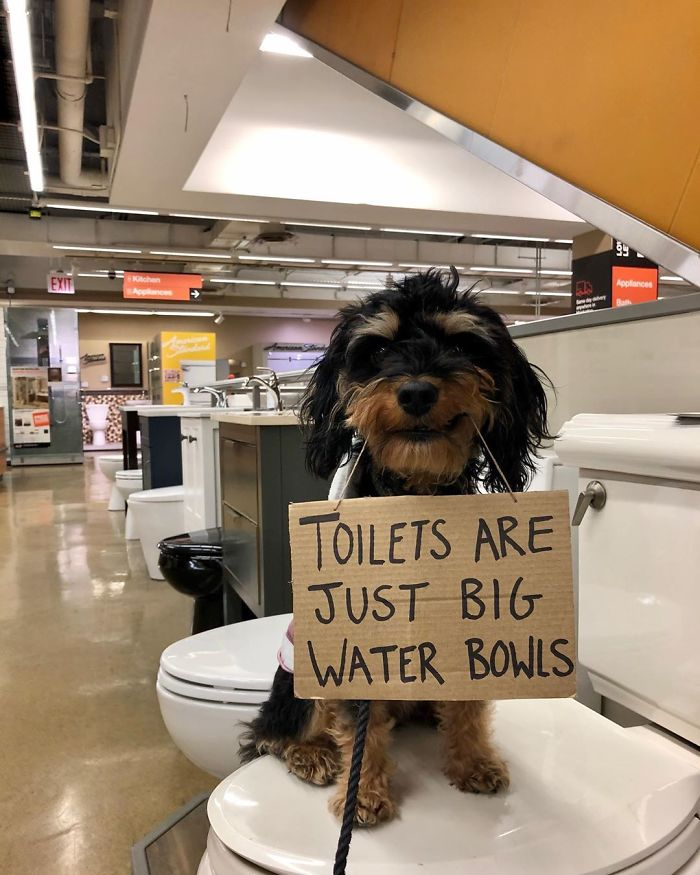 Dog Protests Annoying Everyday Things With Funny Signs (12 Pics) | Bored Panda