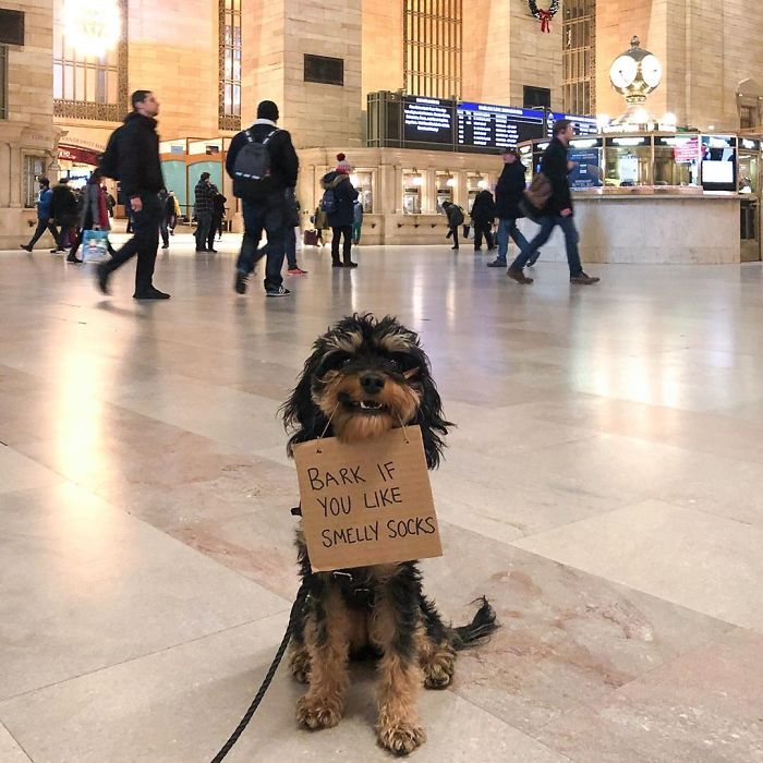 Dog-With-Protest-Sign-Baboy
