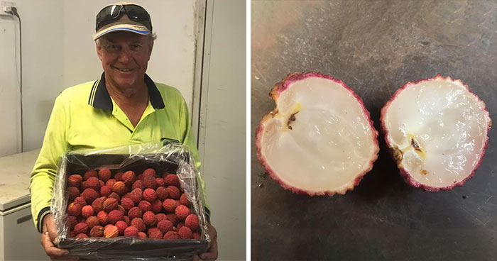 Having Spent $5,000 19 Years Ago On A Lychee Tree From China, This Farmer Has Successfully Bred Seedless Lychees From It