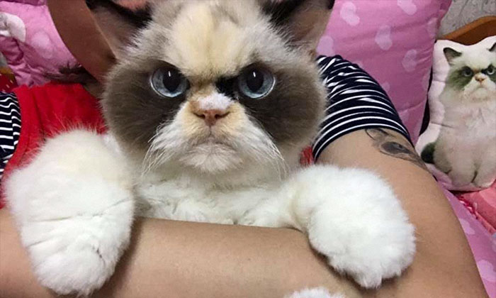 Meet The New Grumpy Cat That Looks Even Angrier Than Her Late Predecessor