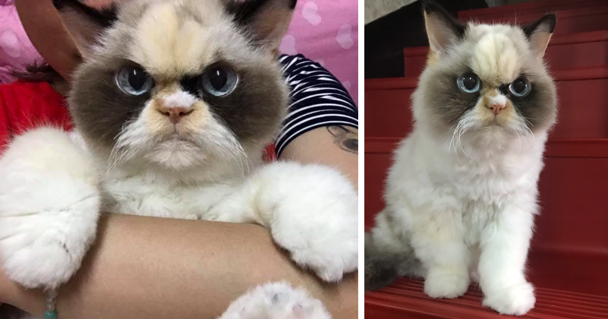 There's A New Grumpy Cat In Town, And It Looks Like A Giant-Eyed Plushy