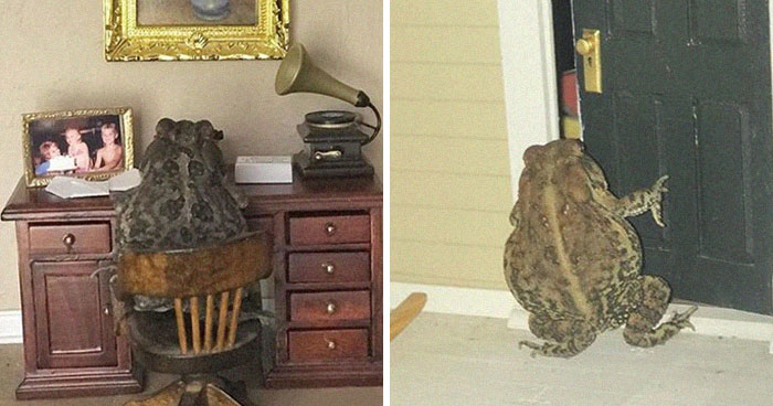 Woman Keeps Photographing Her Toad Doing Human-Like Things In Her Dollhouse And People Are Loving The Pics And The Captions