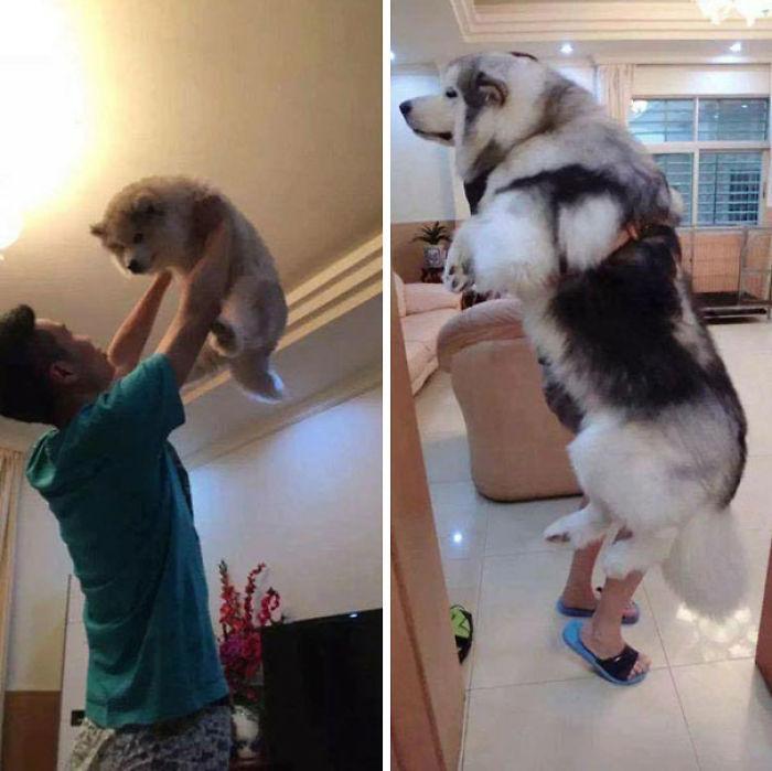 De cachorro y de adulto