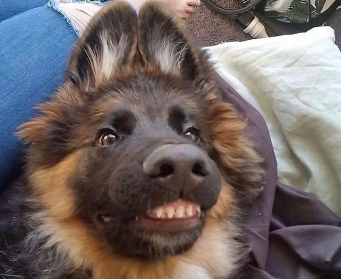 Funny-Dog-Teeth-Toofers