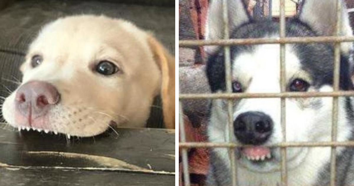86 Pics Of Cute And Toothy Dog Smiles