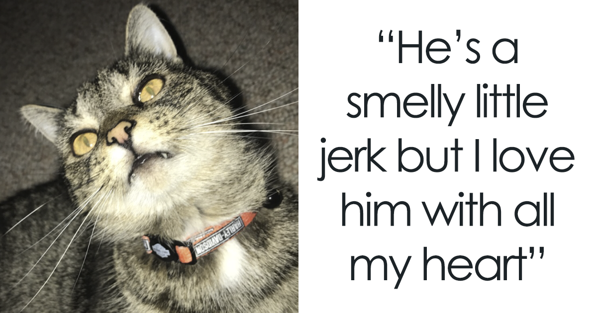 The Internet Fell In Love With This Shelter Cat That's Named After A Breakfast Sandwich