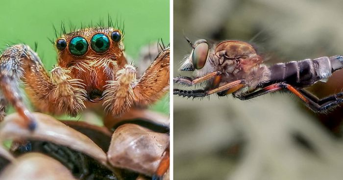 I'm A Macro Photography Enthusiast, And I Take Photos With A Phone And DIY Lenses (57 Pics)