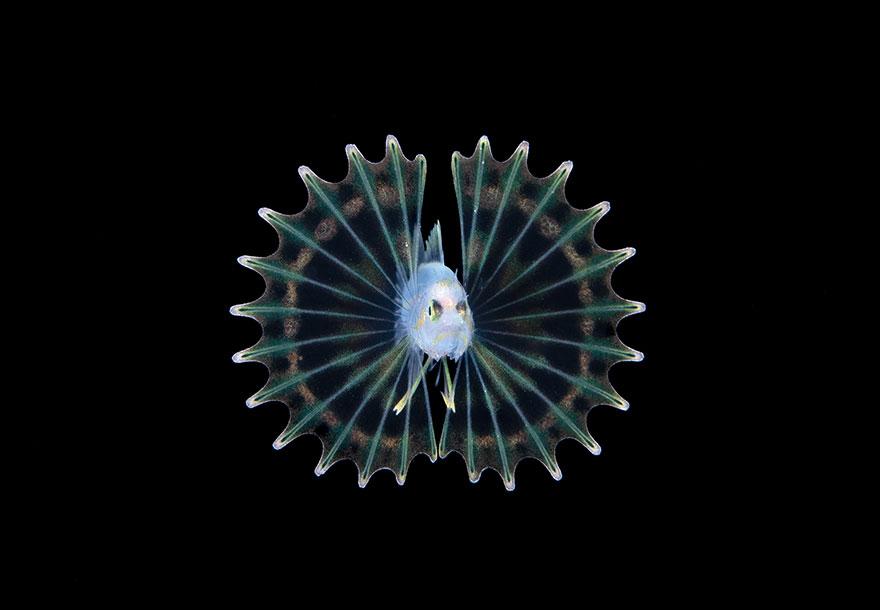 "3rd Place - Steven Kovacs - Blackwater Category - ""Lionfish"""