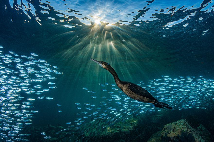 "4th Place - Hannes Klostermann - Marine Life Behavior Category - ""Strange Encounters"""