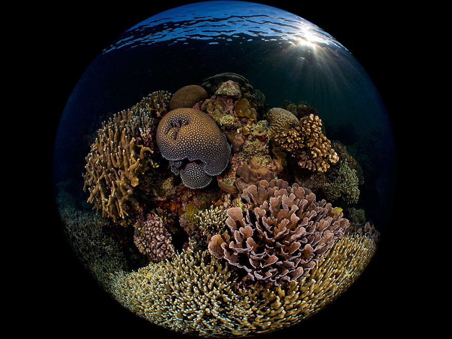 """3rd Place - Enrico Somogyi - Reefscapes Category - """"Reef At Sunrise"""""""