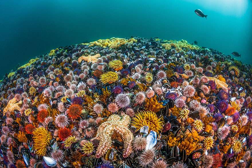 """4th Place - Greg Lecoeur - Reefscapes Category - """"Biodiversity"""""""
