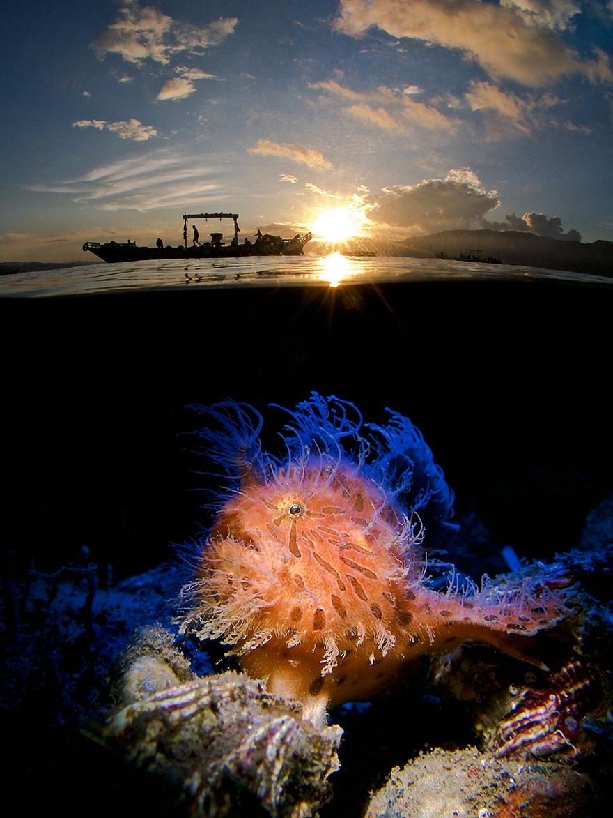"2nd Place - Enrico Somogyi - Underwater Art Category - ""Hairy At Sunrise"""