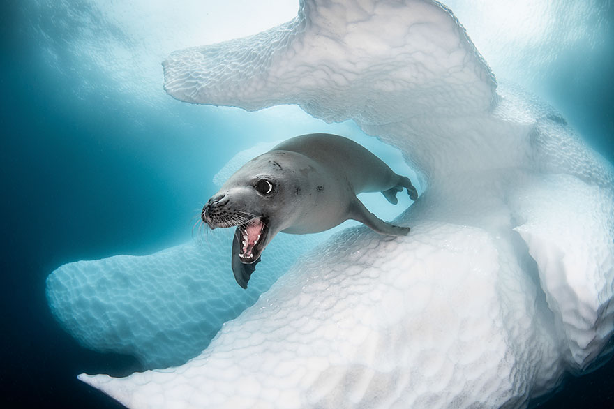 Az Ocean Art víz alatti fotóverseny nyertesei