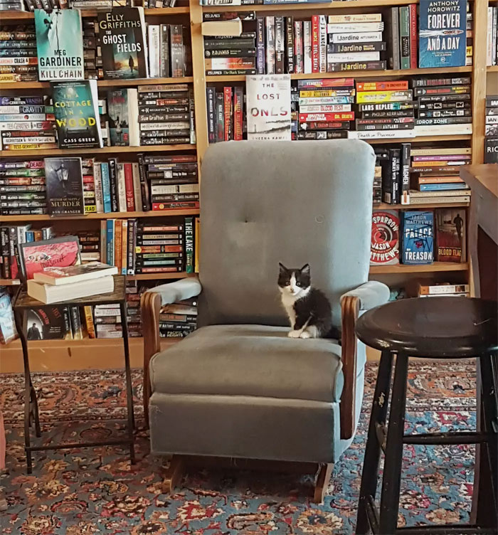 Kittens Roam Freely In This Bookstore In Canada And Customers Can Even Adopt Them