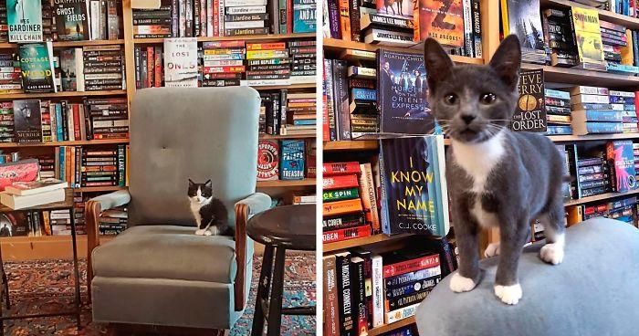 https://static.boredpanda.com/blog/wp-content/uploads/2020/01/otis-clementines-books-coffee-cats-fb2-png__700.jpg