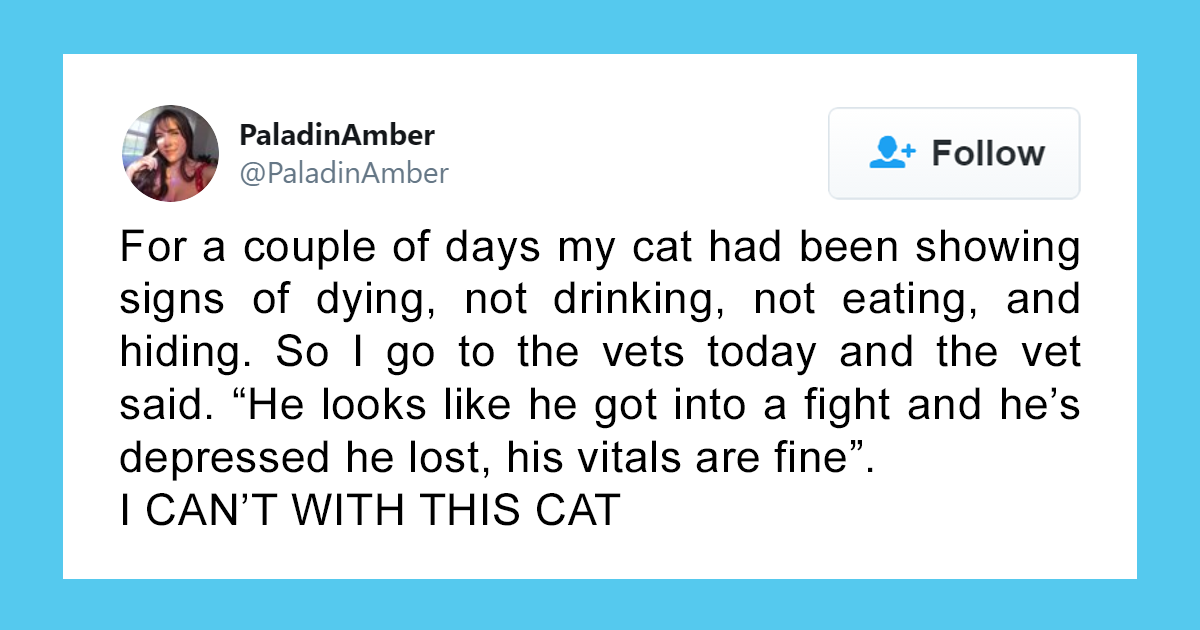 People Are Sharing Hilarious Stories About The Times They Thought Their Pets Were Dying