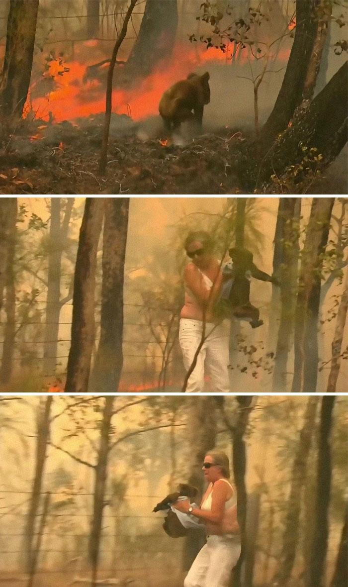 Woman Saves Koala From Bushfire