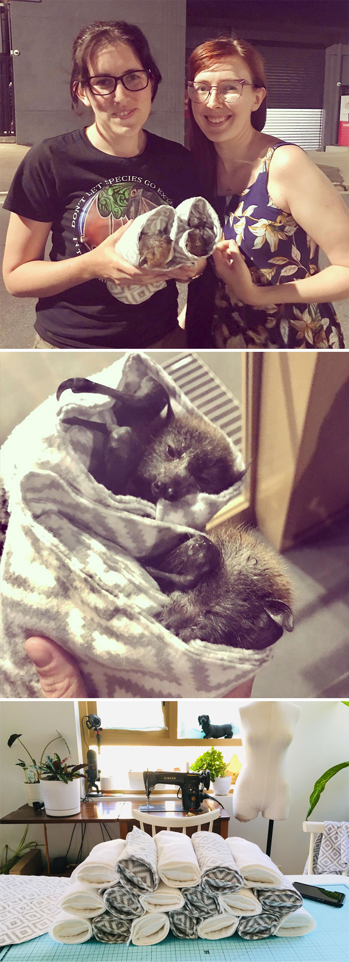 Tonight I Got To Meet The Baby Orphan Bats Of The Aussie Bushfires That I Made The Wraps For