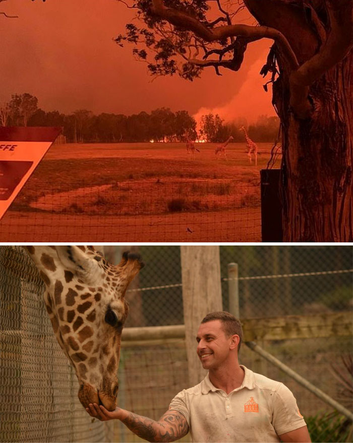 Australian Zookeeper Saves Animals From Terrible Fires By Taking Them Home