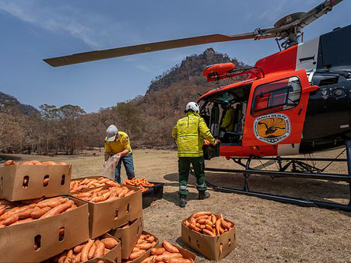 Animals Who Survived Australian Fires Are Starving, So These Planes Dropped Tons Of Vegetables For Them