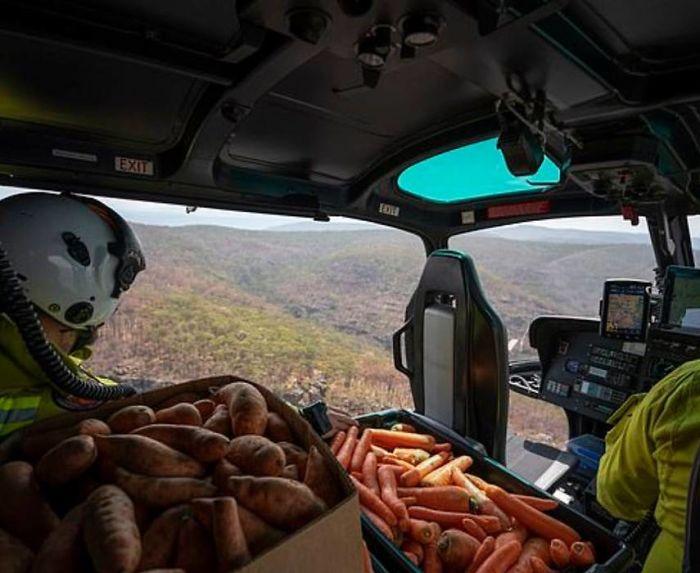 Тонны моркови и картофеля