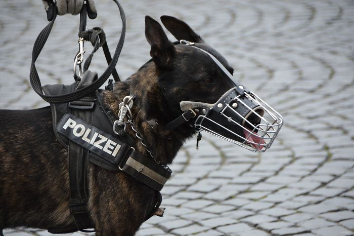 When Police Dogs Retire In Some Countries They May Have The Chance To Receive A Pension Plan For Their Contribution