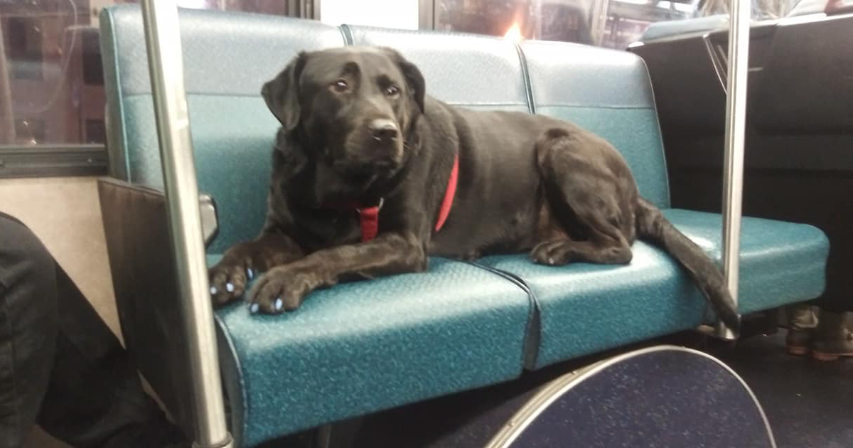 This Impressively Independent Dog Knows How To Take The Bus To The Dog Park & She Does It Every Day