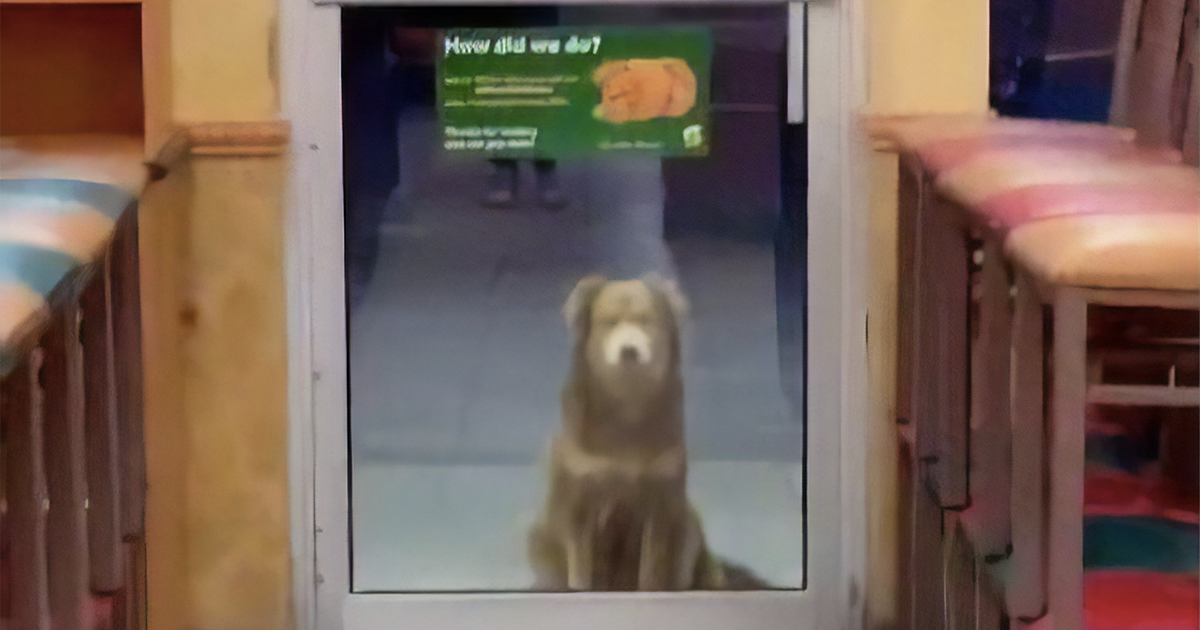 Video Showing Stray Dog That Visits Subway Every Day For A Free Meal Goes Viral