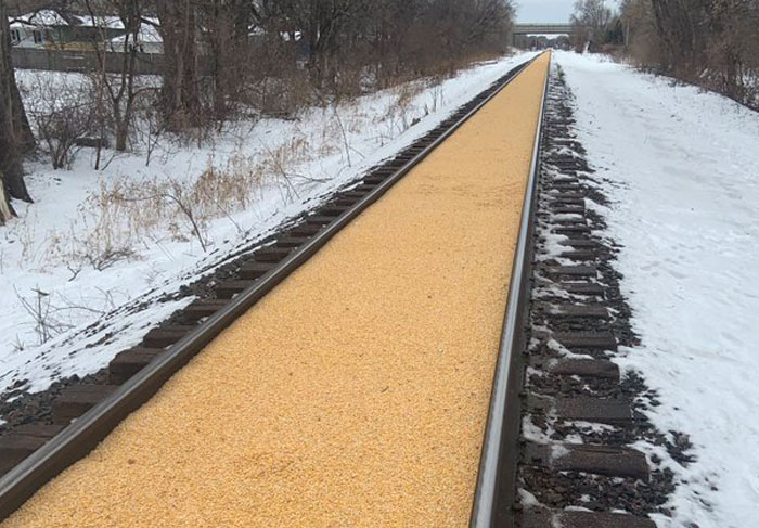Someone Shares A Photo Of A 2,000 Feet Long Railroad Covered In Corn