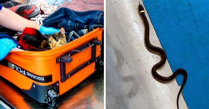 TSA Instagram Account Posts The Strangest Things They Confiscate (30 Pics)