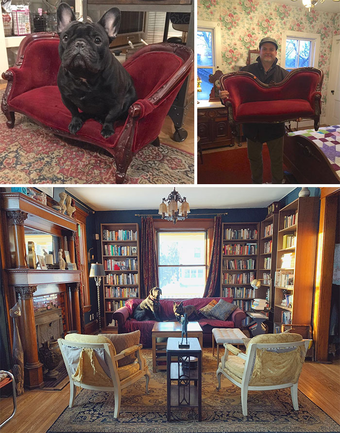 Y'all Wanna See My Adorable French Bulldog On A Tiny Thrifted Victorian Sofa, Yes? The Moment I Brought It Home, He Knew It Was His