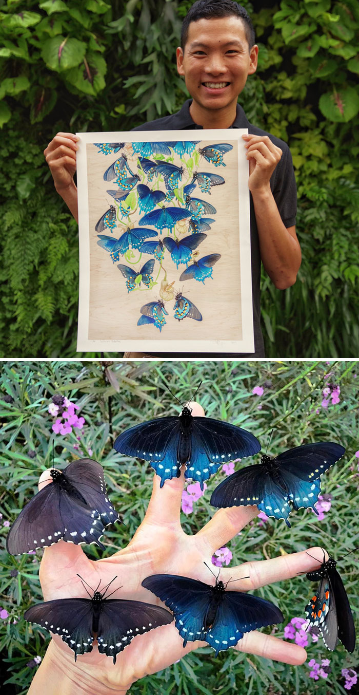 Aquatic Biologist Tim Wong Has Repopulated Pipevine Swallowtail Species, Transforming His Yard Into A Habitat For Them