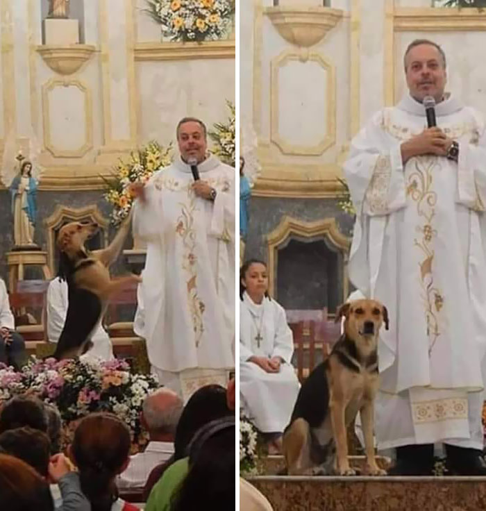 This Priest Shelters Stray Dogs And Brings Them To The Church So They Can Be Adopted